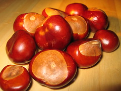 Conkers 2006
