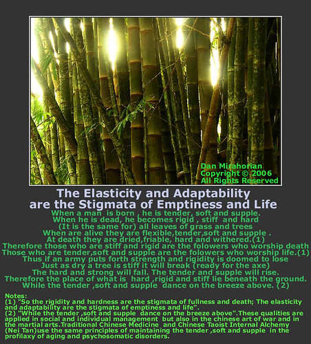 76. The Elasticity and Adaptability are the Stigmata of Emptiness and Life