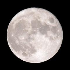 Luna flickrCC