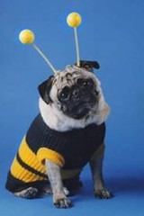 is that really a bee suit?