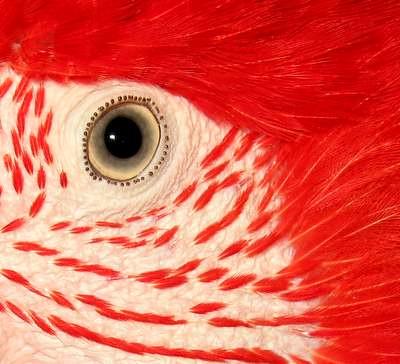 rani the parrot
