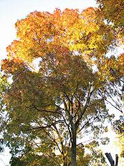 tree+1