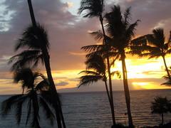 palmera  fuente flickrcc