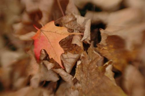Lensbaby Leaf