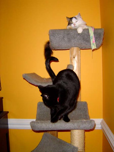 Harper and Nessie in their tree