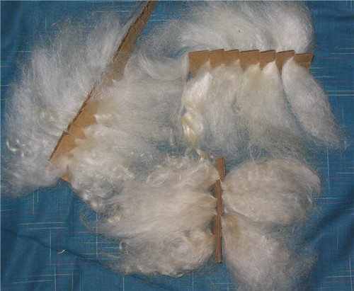 Mohair locks secured in a cardboard band - Mèches de mohair dans les fentes d'une bande cartonnée