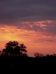 Arlington sunrise, 11/16/06
