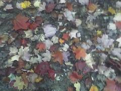 fallen leaves - fall walk