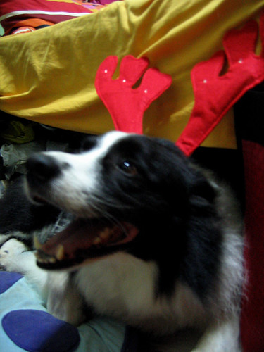 I want to be santa's reindeer...
