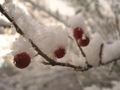 Nov_Dec_2006 074