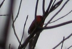 Cardinal_Mass_Trail_Dec_2006