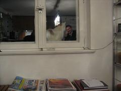 Eine wilde Katze am Fenster von Roberts Haus