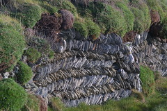Stone wall in Cornwall