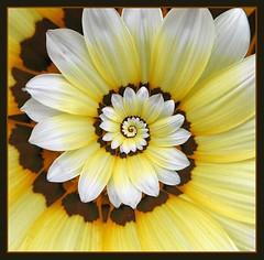 Recursive flower