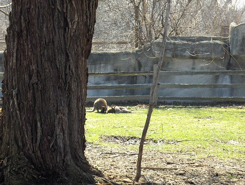 Det Zoo 41108_0001