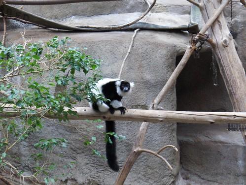 Det Zoo 123007_0130