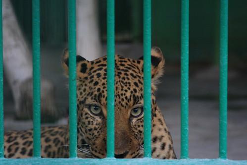 Prisoner # 215353