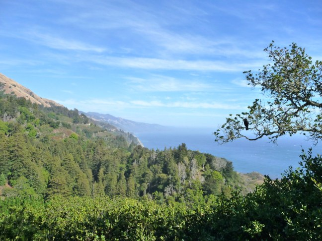 View from outdoor dinner table at Nepenthe in Big Sur