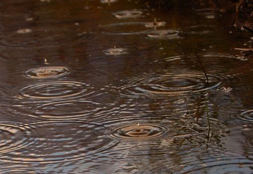 Raindrops, Croak17, Flickr