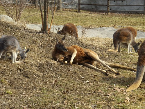 Det Zoo 031508_0007