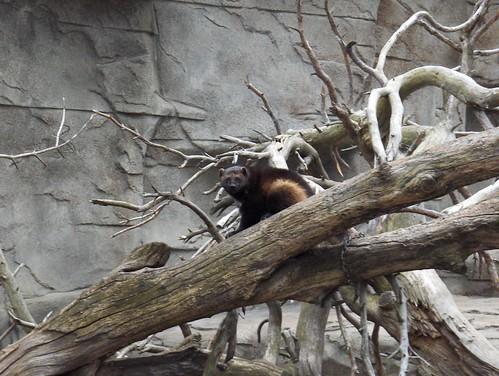 Det Zoo 123007_0133