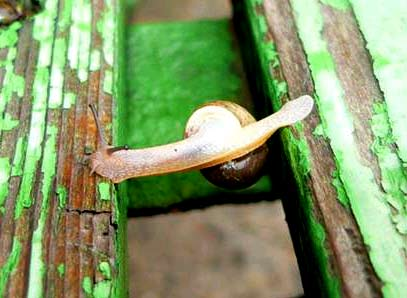 Snail crossing over gap