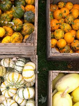 Gourds at a Bucks County Pennsylvania Farm
