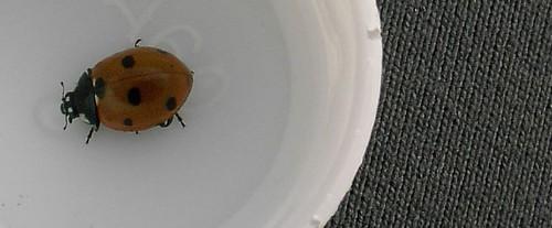 Industrial Ladybug