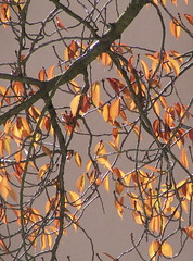 Leaves and Light (cropped)