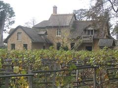 Image of a vinyard at Marie-Antoinette's hamlet in Versailles