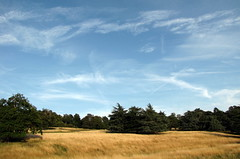 Sky over late summer grass