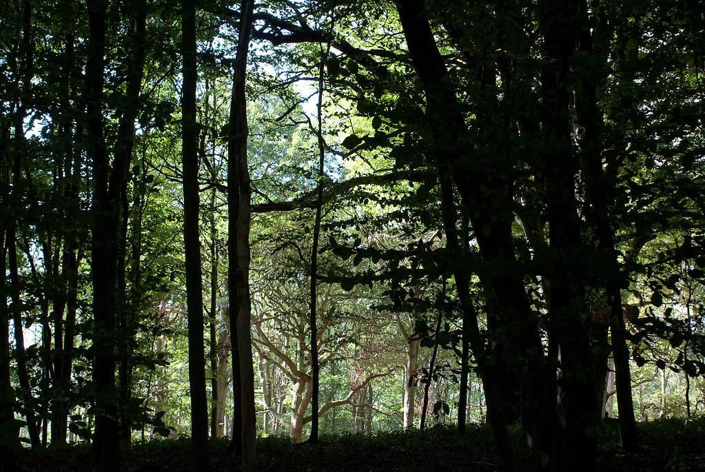 Whytham woods