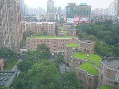 grassy roofs