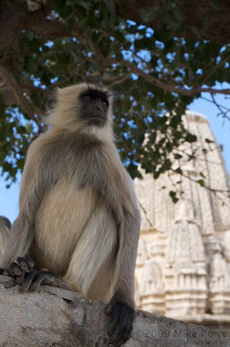 Monkey at the Fort