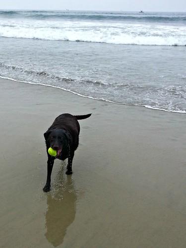 Doggie Beach_772013_7