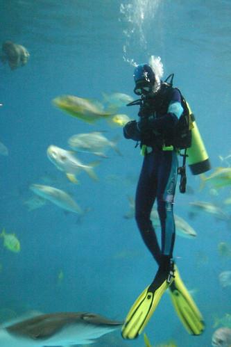 A Meditative Diver