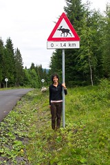 Road Sign -Moose