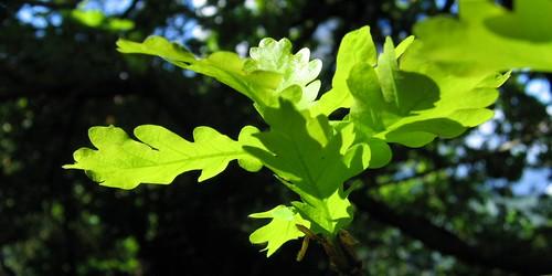 New Spring Leaf
