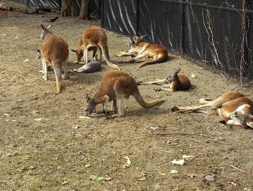 Det Zoo 031508_0025