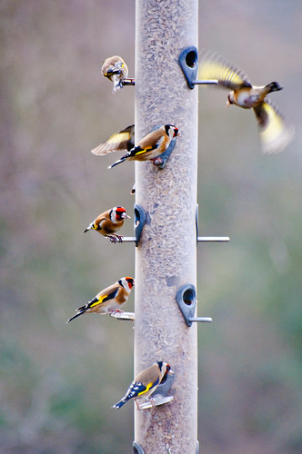 31/365 Feeding time
