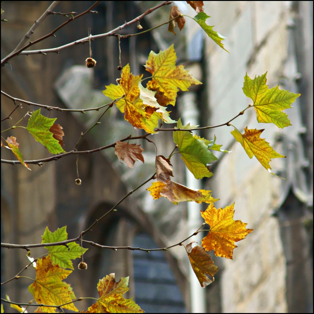 Paris leaves in autumn