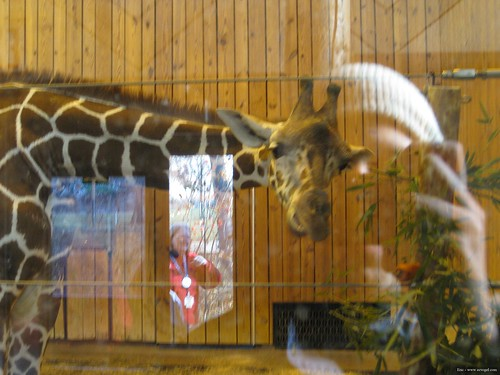 Det Zoo 112908_0036