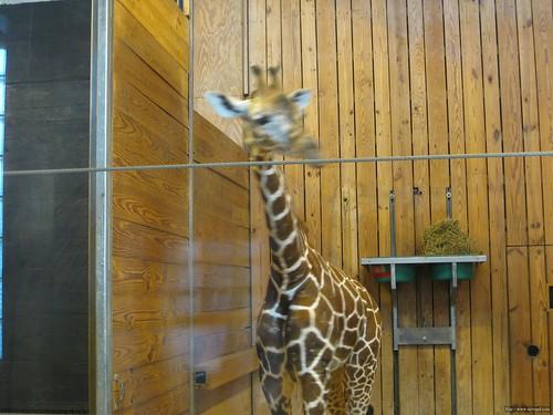 Det Zoo 112908_0046