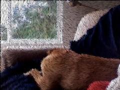 Sleeping Dog, Window