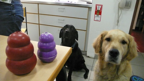 Kongs and dogs...
