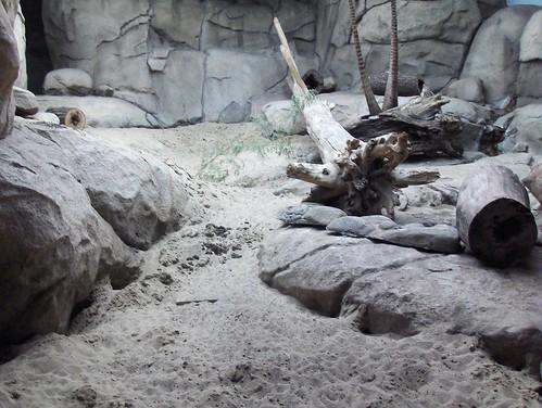 Det Zoo 072808_0010