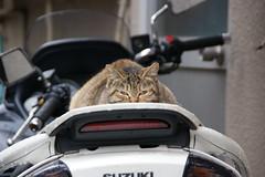 バイクの上から睨んでます