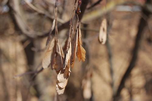 pernyksciai lapai užupyje