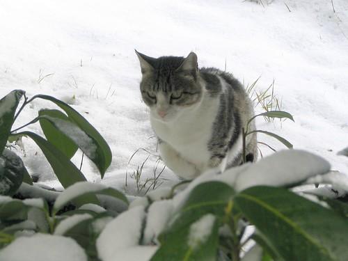 First Snow - 22