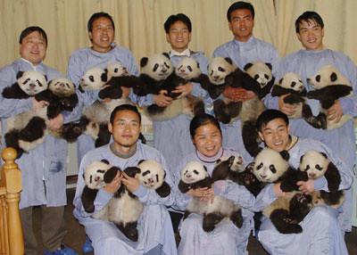 panda cubs3
